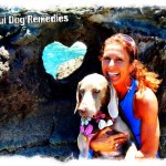 Maui Dog Training + Running + Retreats + Remedies