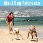 Maui Dog Training Retreats