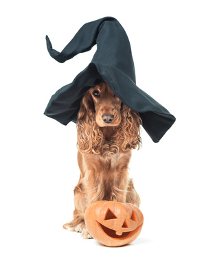 Pumpkin Dog Treat Recipes
