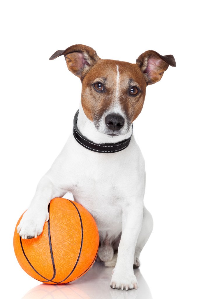 Dog Training Online Courses